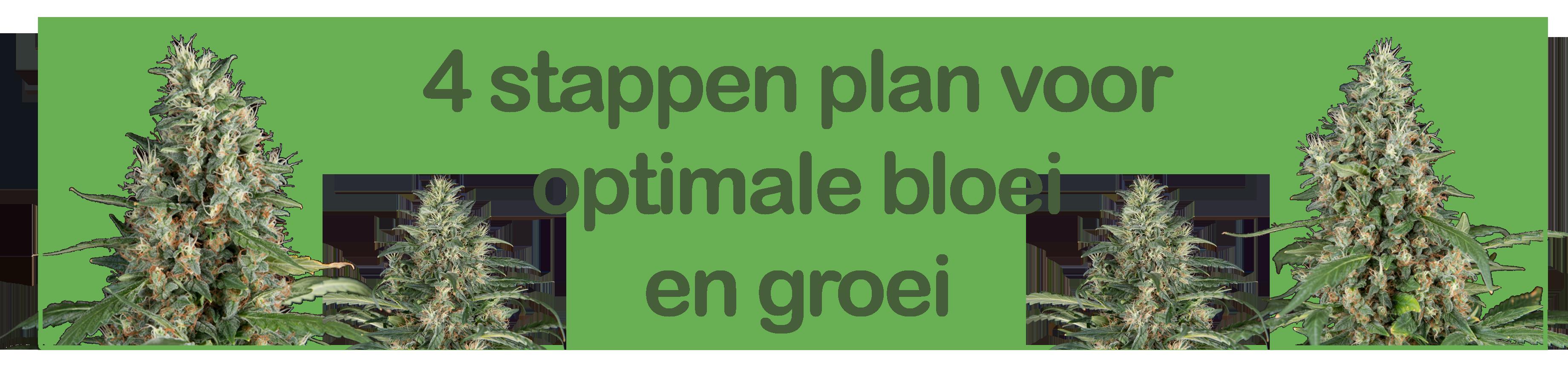 4 stappen plan voor een volledige organische kweek
