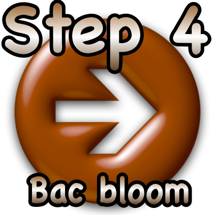 Step 4 Bac bloom