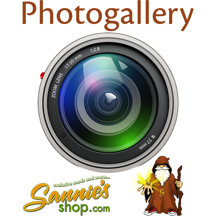 Fotogallery sanniesshop.com
