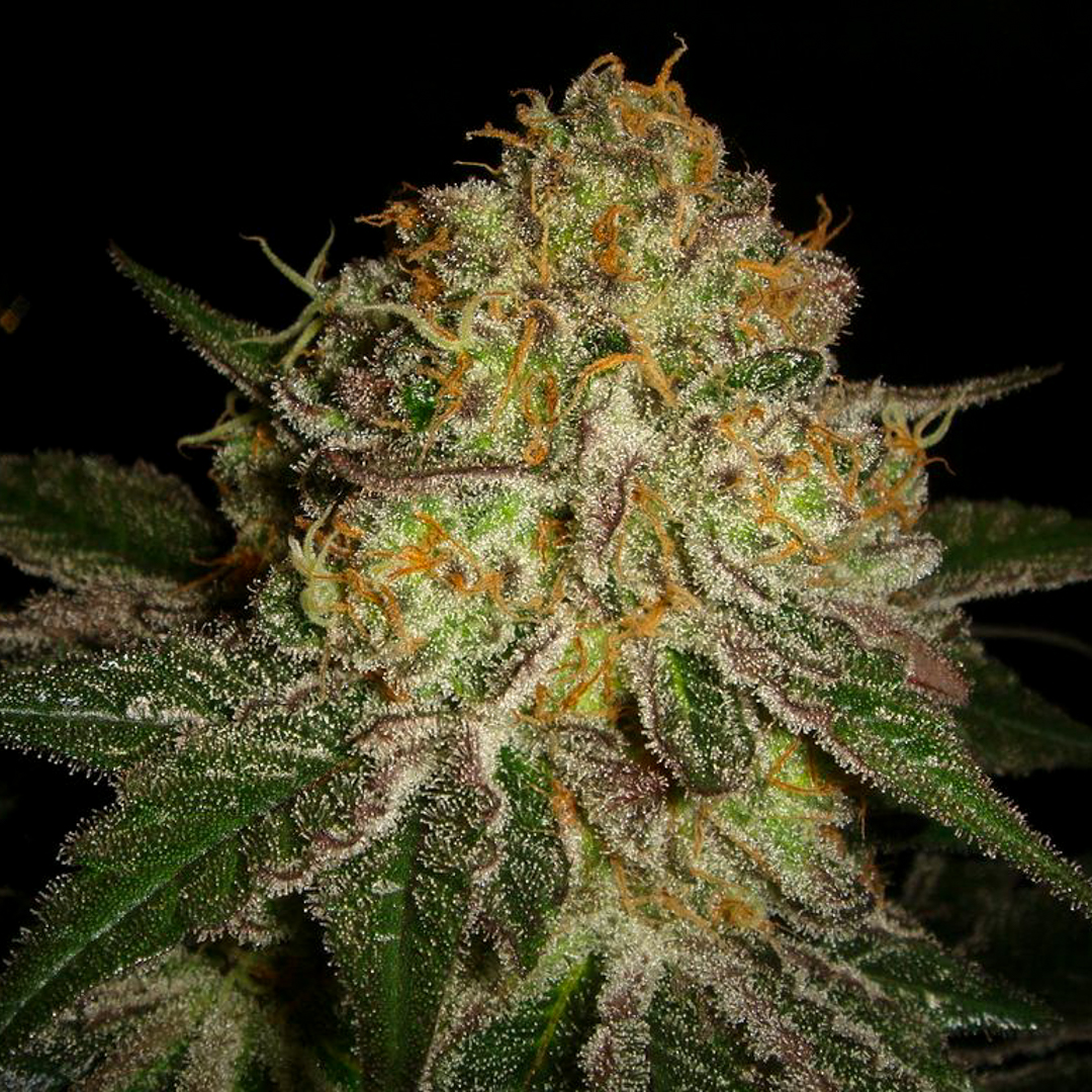 Herijuana
