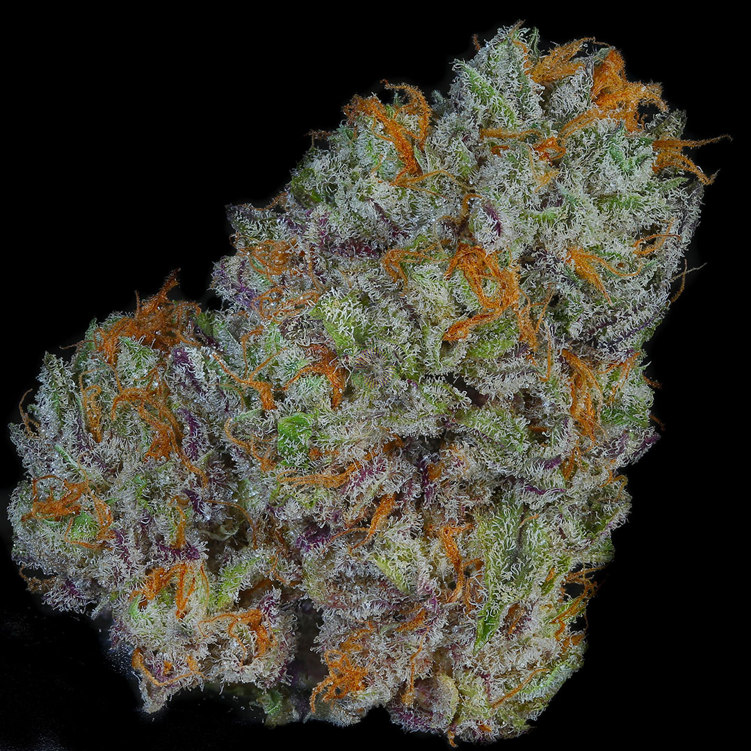 Dried bud Salmon River OG is dense and covered in resin