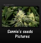 Sannie seeds foto gallery