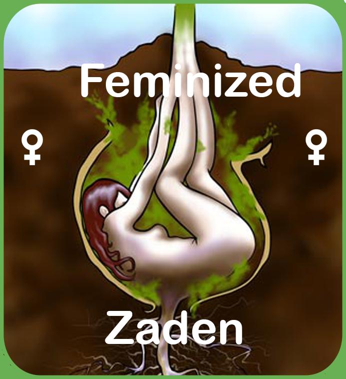 feminized cannabis zaden te koop in sanniesshop
