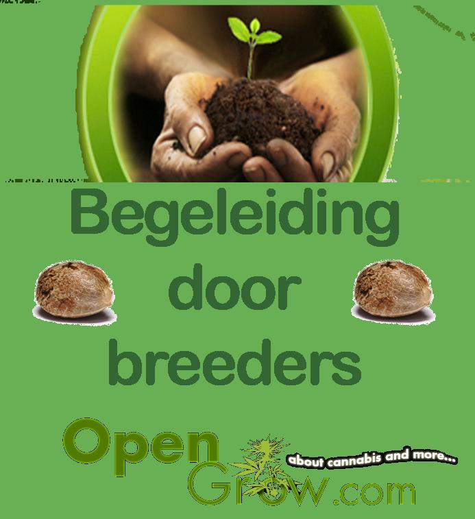 Uitleg en begeleiding van de breeders van de zaden op opengrow.com