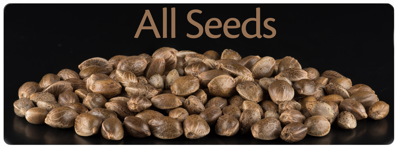 Here you can find all te cannabis seeds that are for sale in sanniesshop