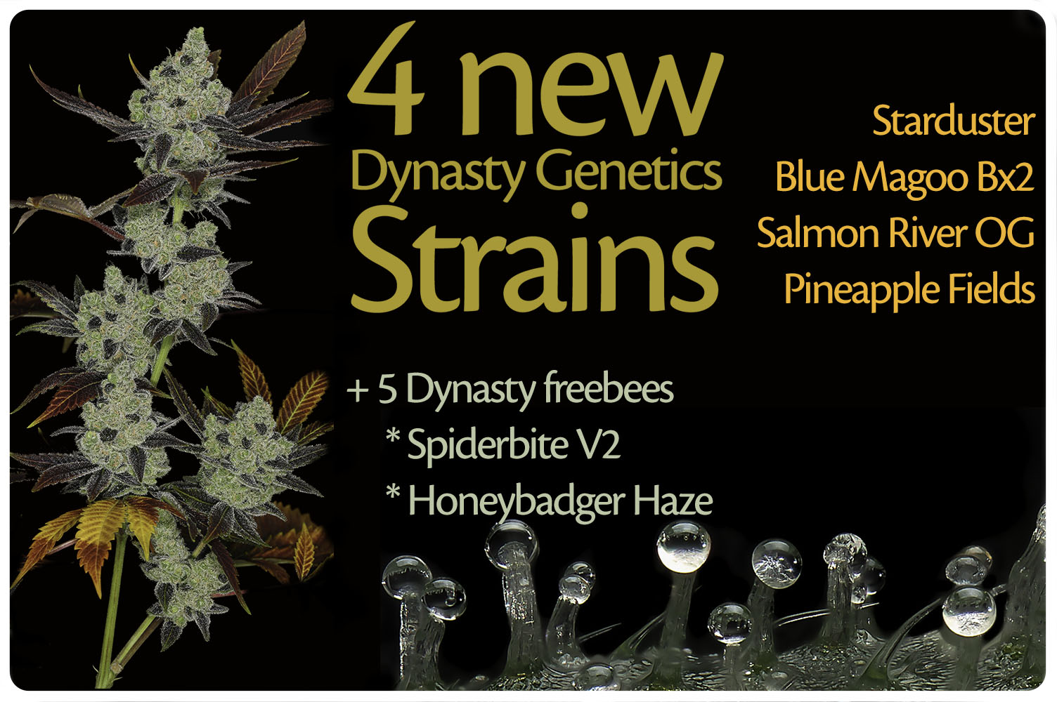 Get 5 freebees with every order from Dynasty seeds
