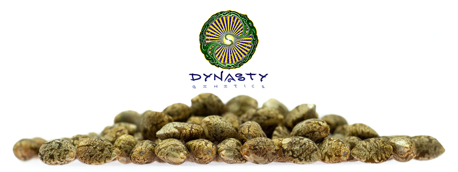 Dynasty genetics conserves and works with elite strains