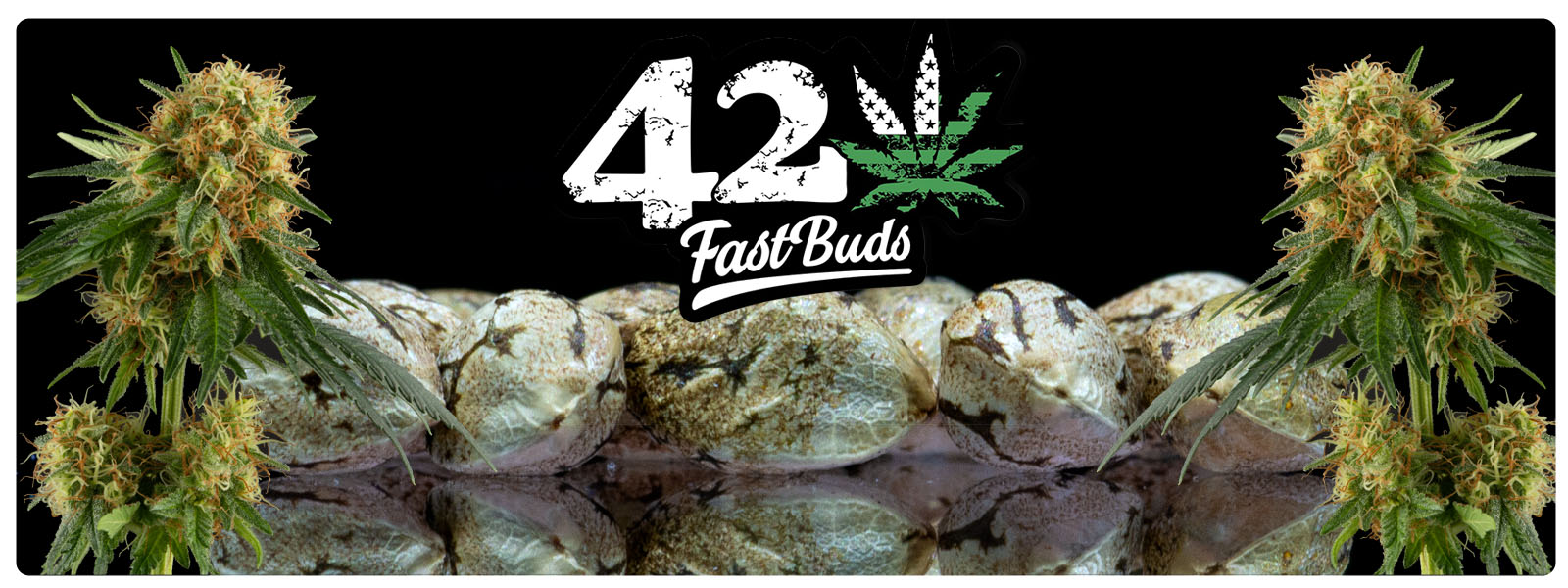 Fastbud feminized auto flower seeds
