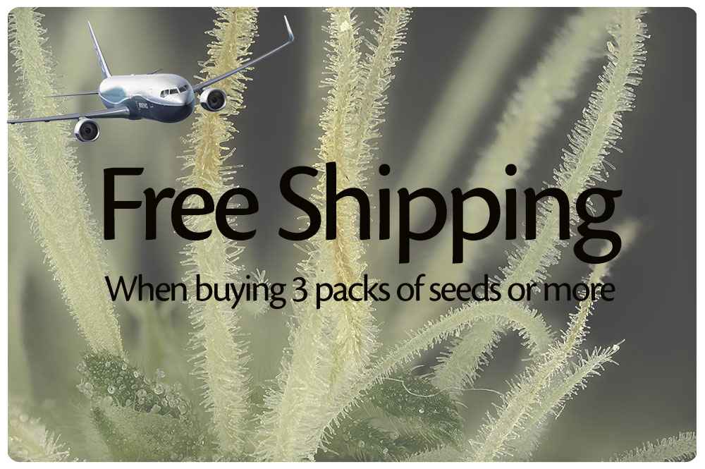 Buy 3 packs of seeds or more and get free shipping