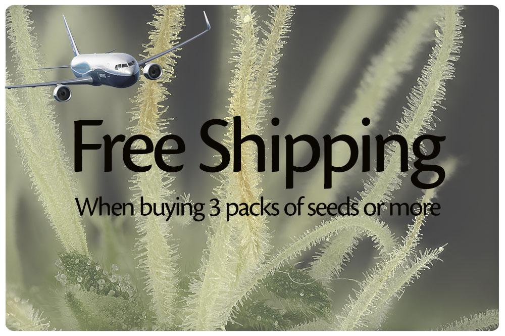 Koop 3 pakjes zaden of meer en krijg gratis verzending
