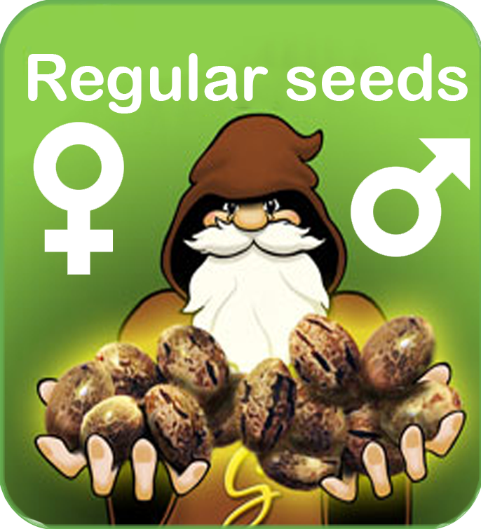 Regular cannabis seeds male and female