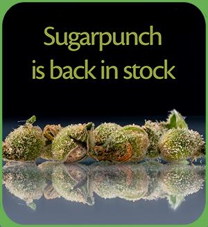 Sugarpunch back in stock