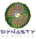 Dynasty genetics regular cannabis seeds
