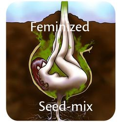 Feminized seed mix with herijuana, Madberry and shackzilla