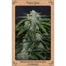 Fugue state from mephisto genetics auto flowering seeds with great yield and strong potency