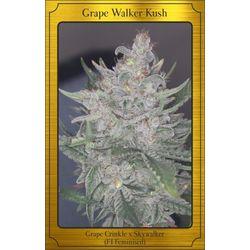 Grape Walker Kush auto flower cannabis seeds from  Mephisto genetics