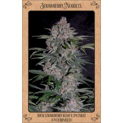 Strawberry Nugget auto flowering cannabis seeds from mephisto genetics